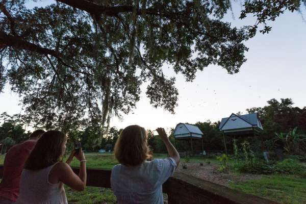 People watch the daily emergence of bats from the UF Bat Barn.